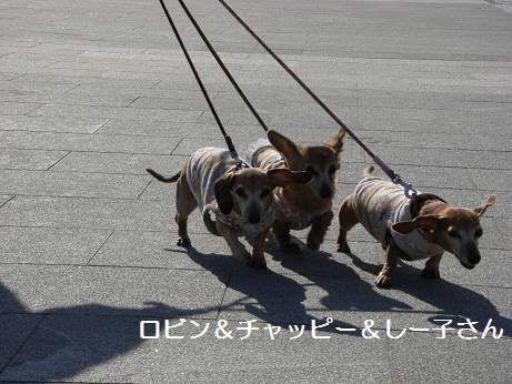 2月12日散歩3.jpg