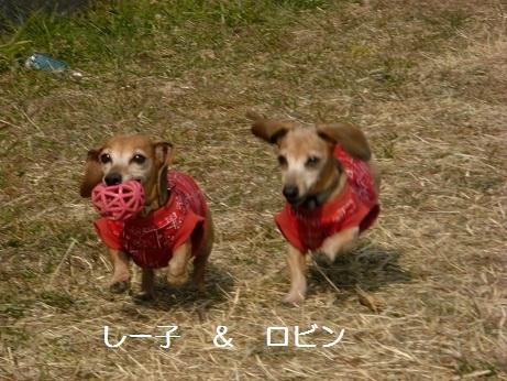 2月5日散歩.jpg