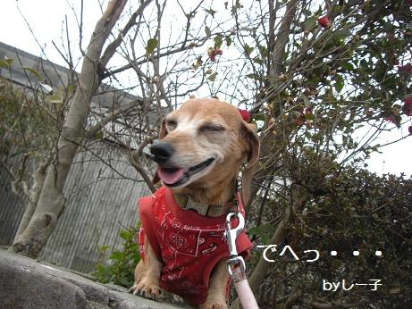 2月5日散歩2.jpg