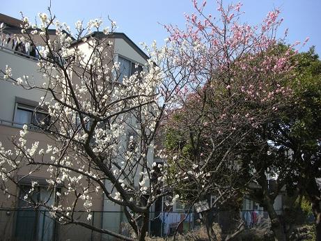 3月20日散歩4.jpg