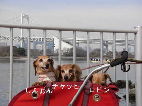 3月6日お台場1.JPG