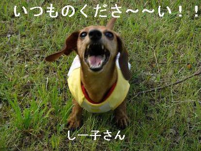 夕方散歩1.JPG