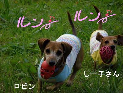 夕方散歩2.JPG
