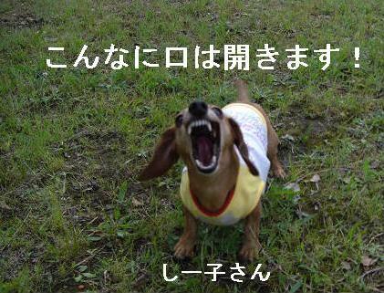 夕方散歩6.JPG