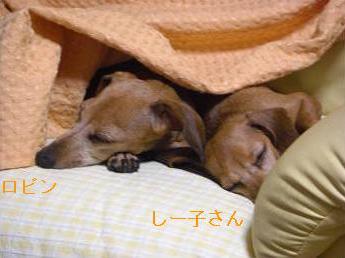 寝てる1.JPG