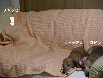寝てる2.JPG