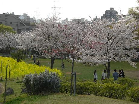 桜散歩1.JPG