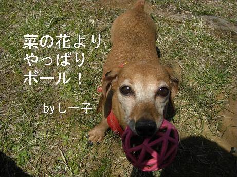 菜の花さんぽ2.JPG